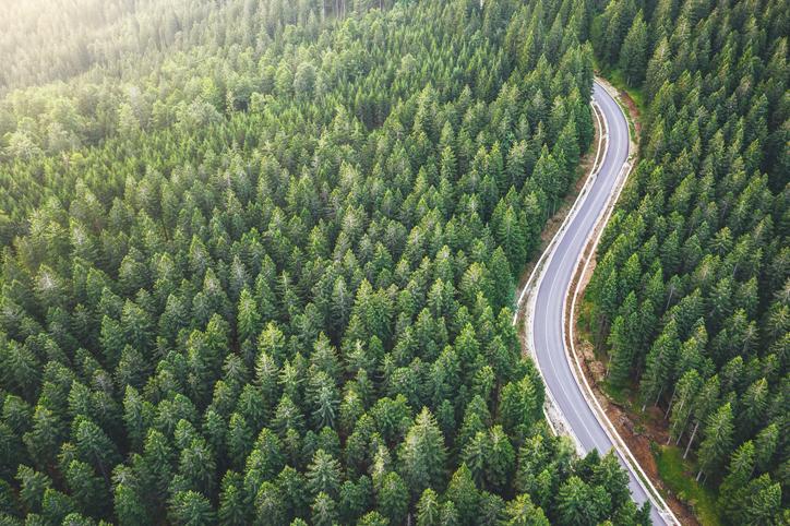 Bosque carretera naturaleza